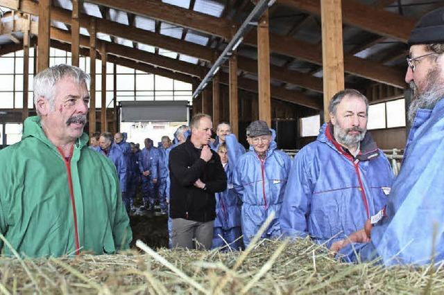 Im neuen Stall geben Kühe mehr Milch