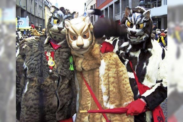 Die Freiburger Miau-Zunft wird 80 Jahre alt