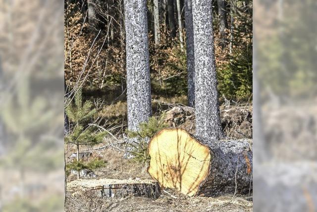 Satter Gewinn aus Wald