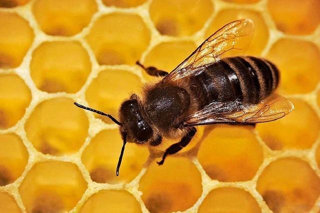 Imker machen ihre Bienenvölker fit für den Frühling