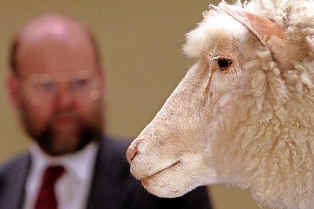Vor 20 Jahren wurde Dolly zum ersten Mal der Öffentlichkeit präsentiert