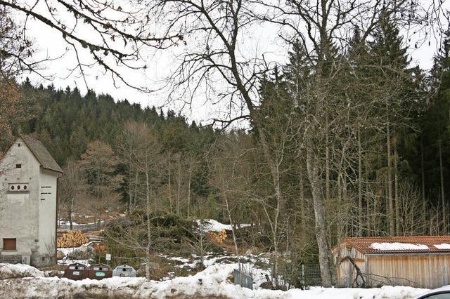 100 Jahre alte Bäume werden gefällt
