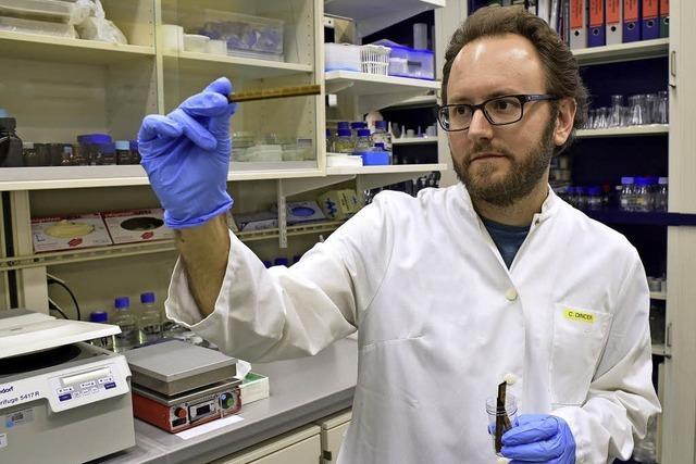 Institut für Mikrosystemtechnik entwickelt leistungsfähige Biosensoren