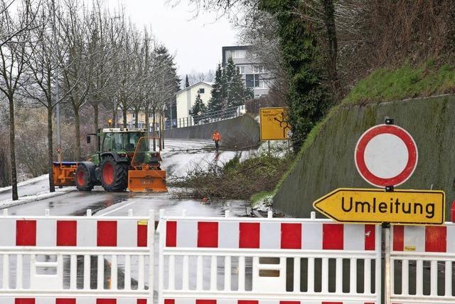 Gefahr durch schiefe Bäume