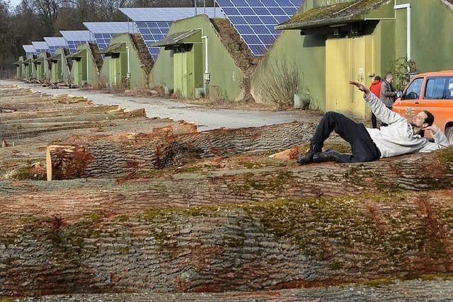 Was wird aus den todgeweihten Eschen? Holz aus dem Stadtwald für Ikea nach Fernost
