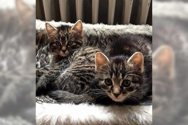 Katzenbetreuung, Tierschutz und Aufklärung