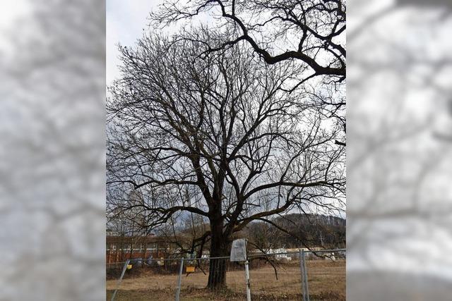 Raum für neue Bäume schaffen