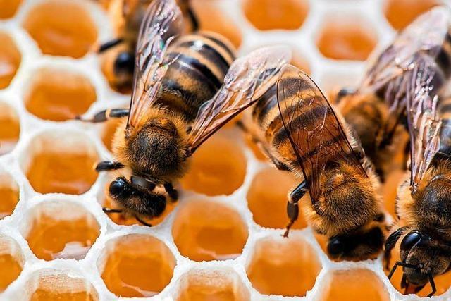 1500 Bio-Bienenvölker machen den Imkern Angst