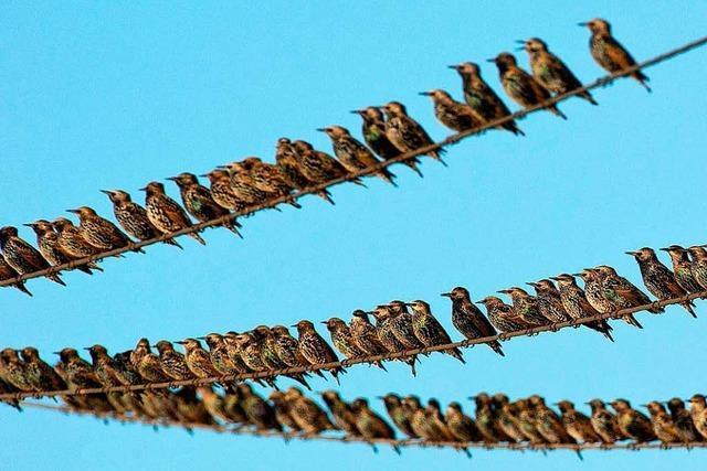 Birdlife: Steg ist Gefahr für Vögel