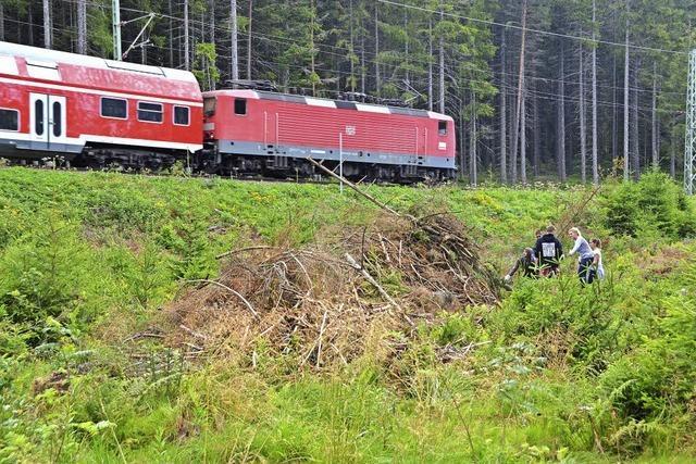 Gemeindewald liefert wieder ein