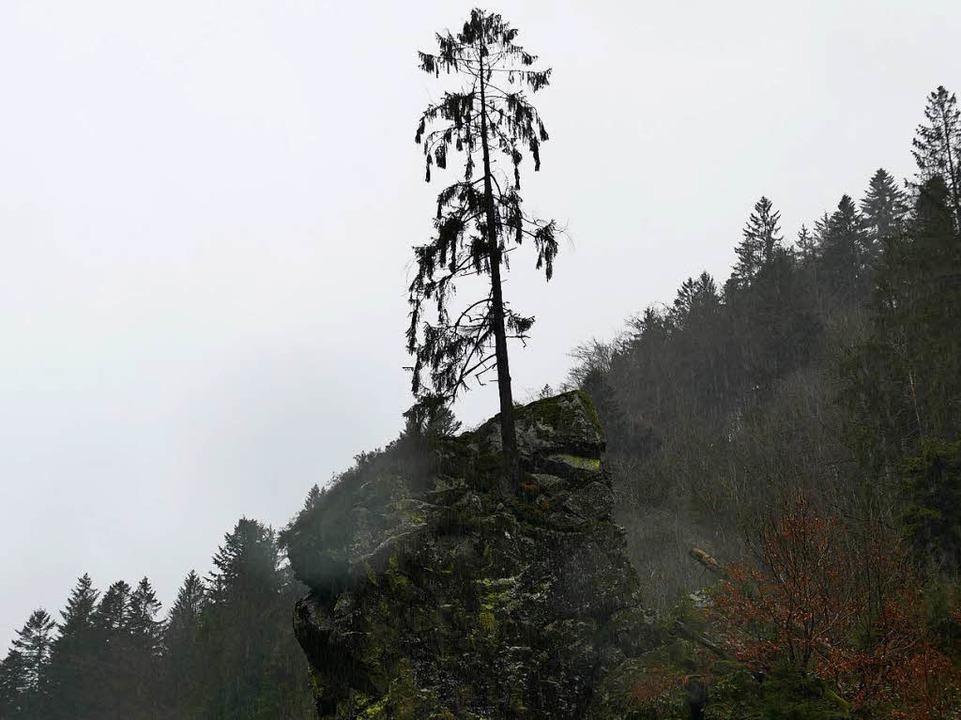 Die Tanne steht nun ganz allein auf dem Felsen.    Foto: Hrvoje Miloslavic