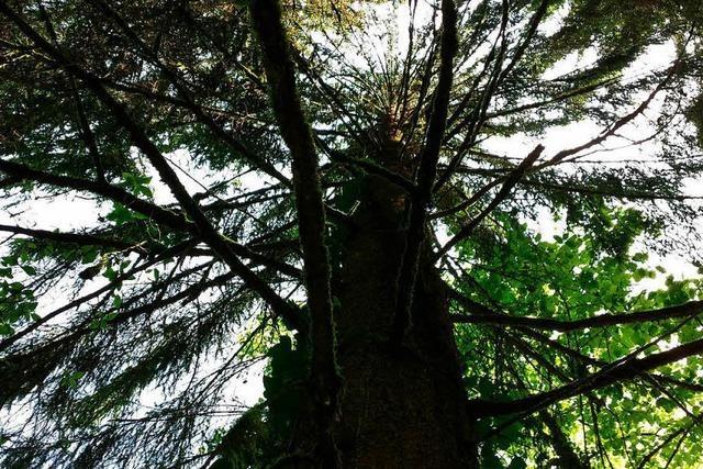 Was hat Lörrach mit 1170 Hektar Stadtwald vor?