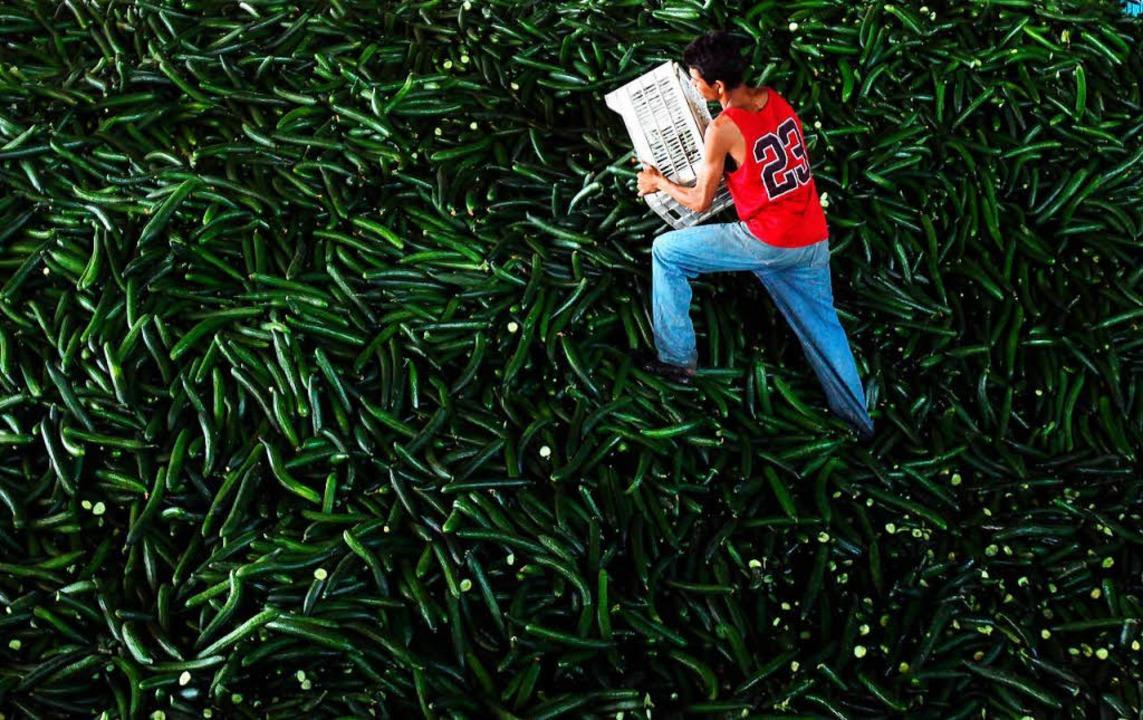 Jedes Jahr landen mehr als eine Milliarde Tonnen Lebensmittel im Müll.   | Foto: Robert Ghemet (dpa)