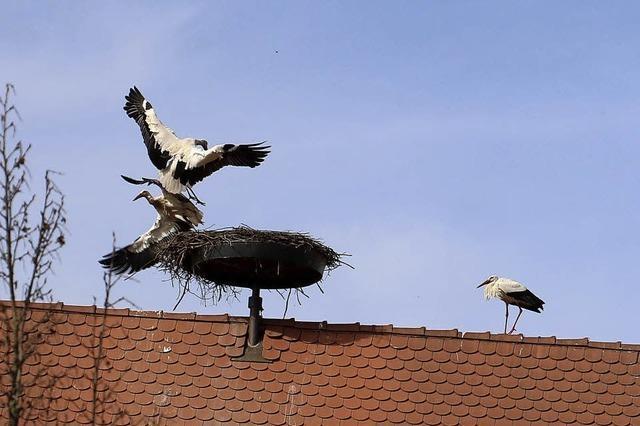 Kampf ums Nest