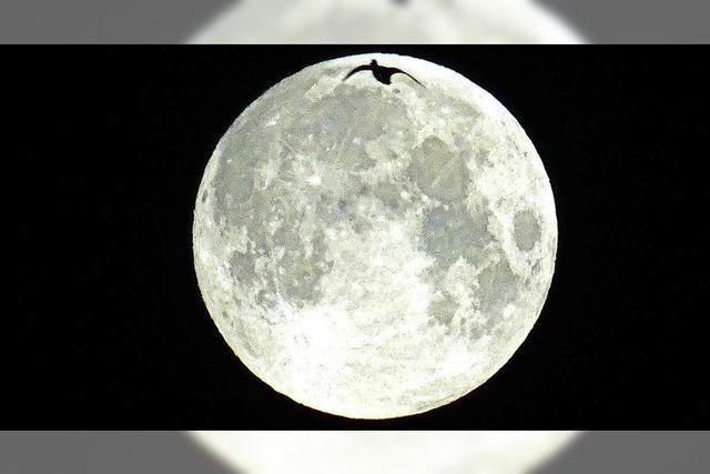 Tierische Mondlandung