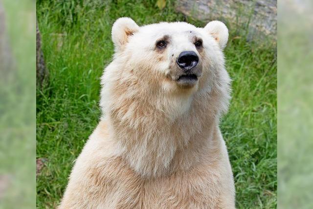 Zoo: Abschuss alternativlos