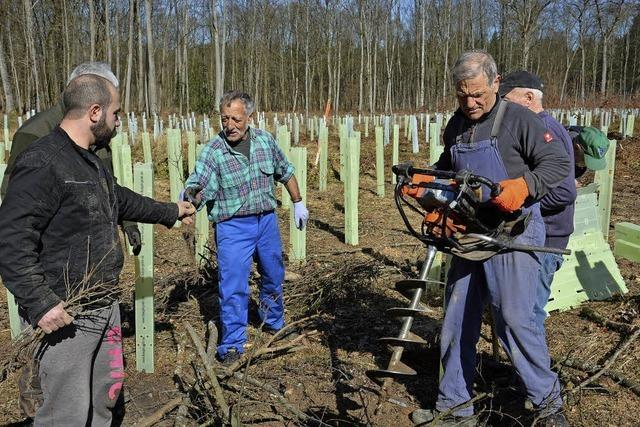 Ein Stück Wald wird neu angepflanzt
