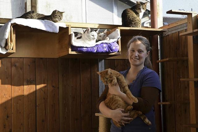 Katzenhilfe ist immer noch ein Provisorium