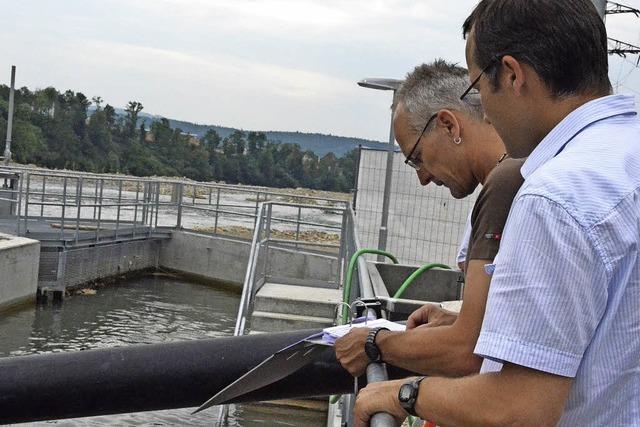 Grundel-Alarm im Fischzählbecken