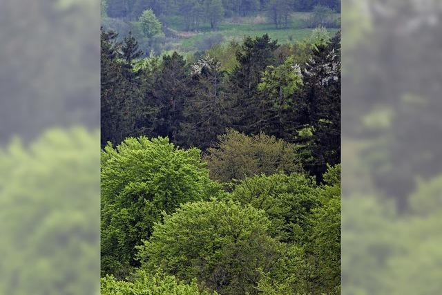 Johannes Zechners Sachbuch handelt vom deutschen Wald als nationales Symbol
