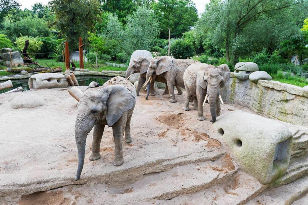Mehr Platz auf verschiedenen Ebenen ha...r großen  Tembea-Anlage im Basler Zoo.    Foto: Zoo Basel (Torben Weber)