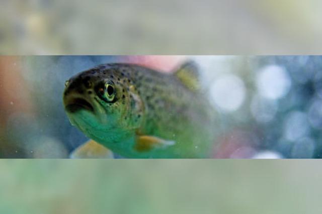 Ökosystem kommt wieder in Fluss