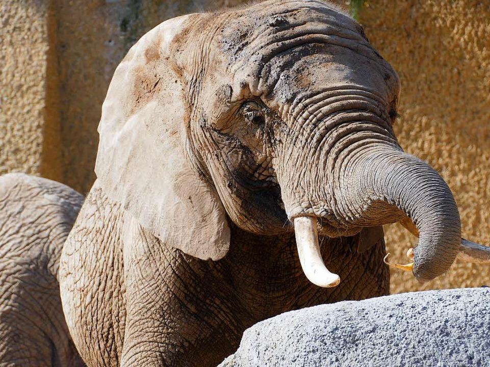 Die neue Elefantenanlage in Basel    Foto: Kathrin Ganter