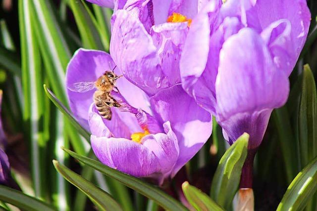 Frühlingshafter Märztag am Hochrhein