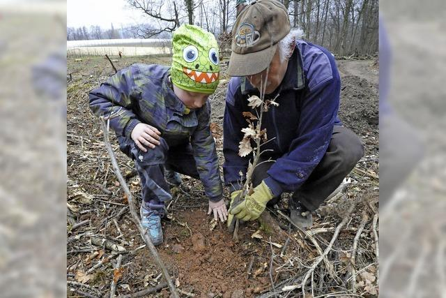 30 Helfer pflanzen 800 Bäume