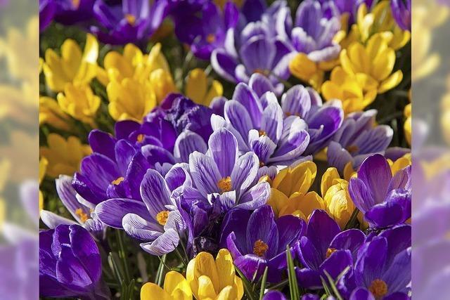 Heute ist Frühlingsanfang