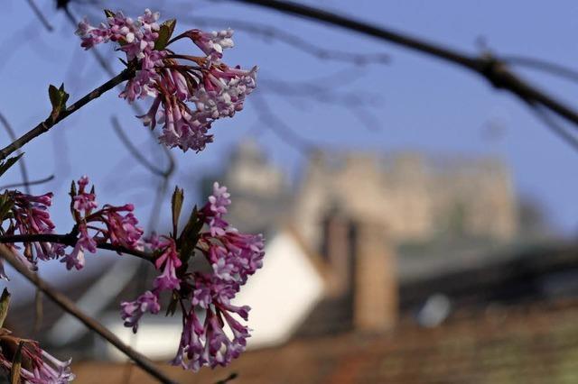 Blüten mit Burgblick