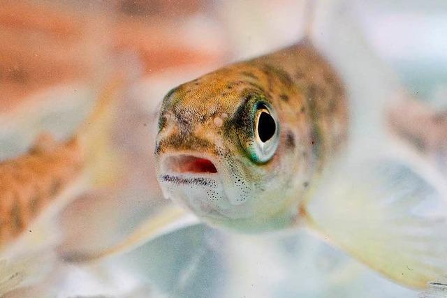 Überfischung: Technik von DSM und Evonik, die Fische rettet