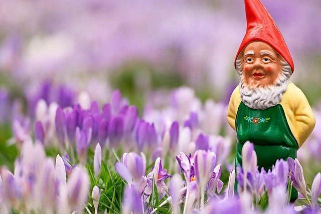 Sanierung von Basler Kleingärten kostet 20 Millionen Franken