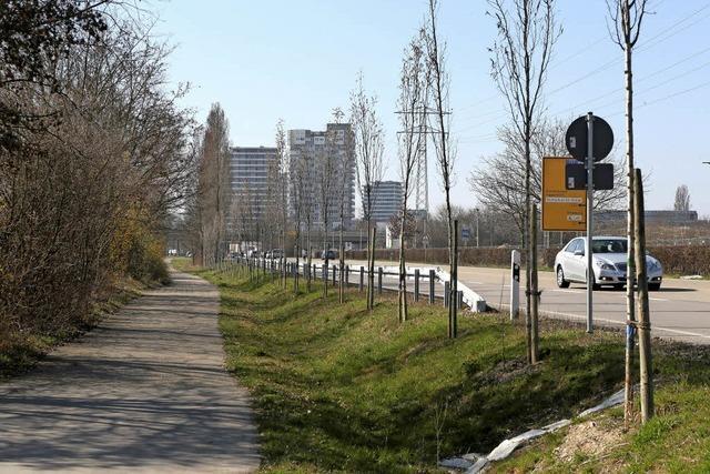 Neue Bäume am Stadteingang