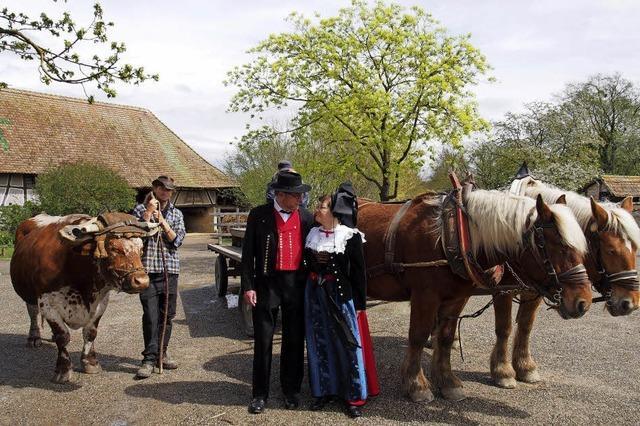 Freizeitparks im Elsass öffnen