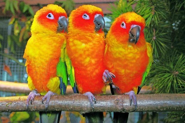 Vogelfreunden gehen die Züchter aus