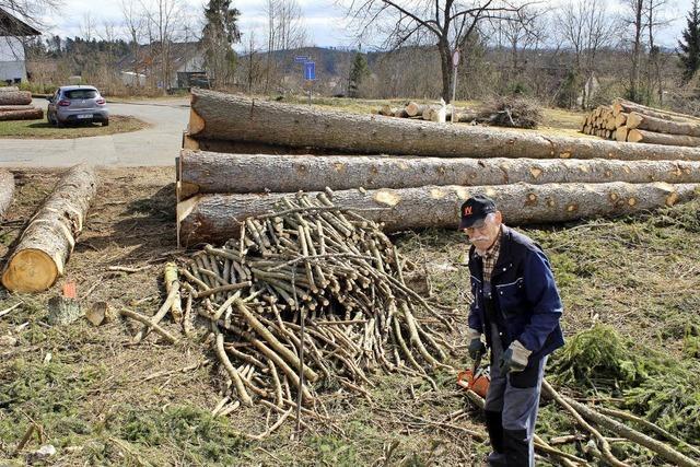 Bäume fallen fürs neue Baugebiet