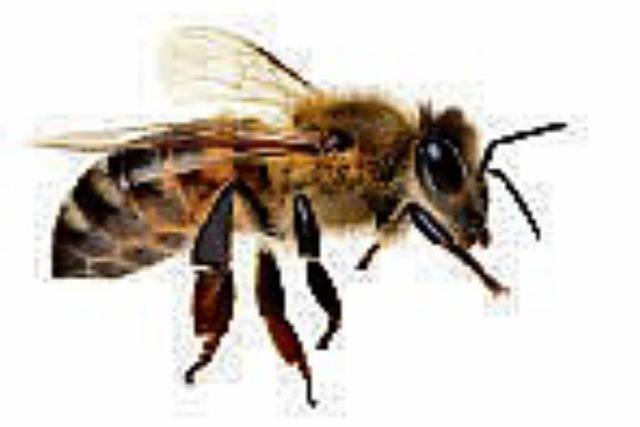 Das Pollensammeln ist ihre Leidenschaft