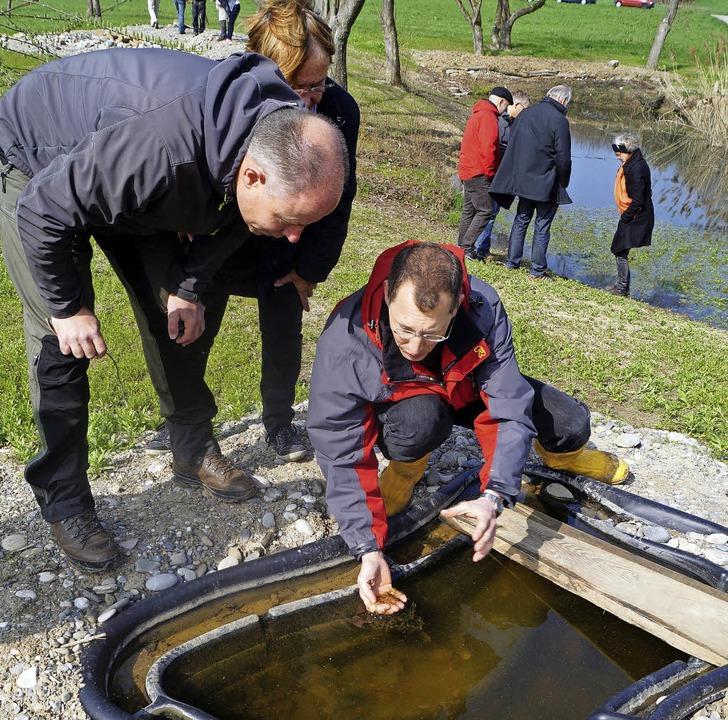 Nabu-Vorstandsmitglied Stefan Kaiser h...sfroschlaich im neuen Biotop entdeckt.  | Foto: Silke Hartenstein