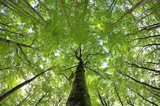 Mehr Einnahmen aus dem Forst