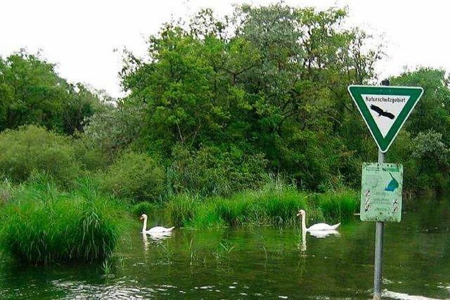 Auch Naturschützer sind für Rückhalteraum am Rhein