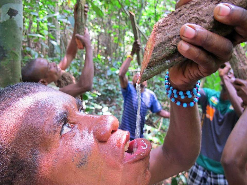 Erfrischung im Dschungel Zentralafrika...äenstammes, trinken Wasser aus Lianen.  | Foto: -