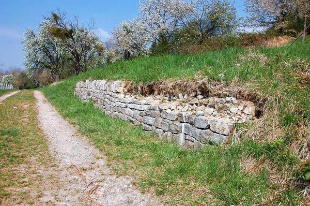 Unbekannter baut Mauer ab und zerstört Eidechsenbiotop