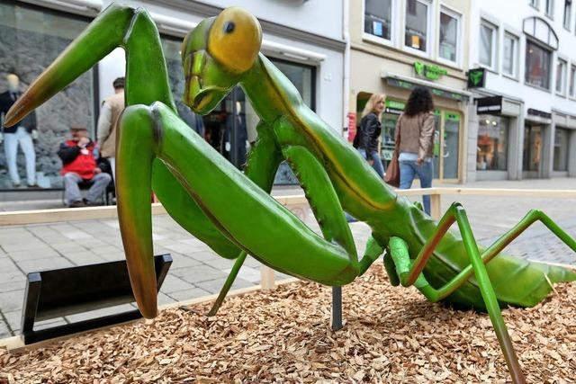 Invasion der Krabbeltiere in Reutlingen