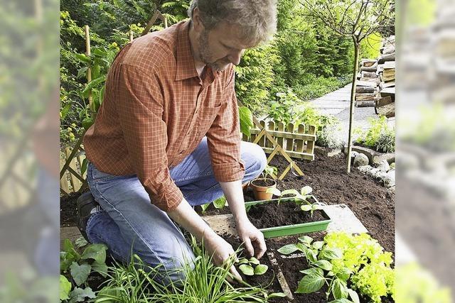 Nutzgarten im April: Pflanzen und säen von Gehölzen, Gemüse und Kräutern