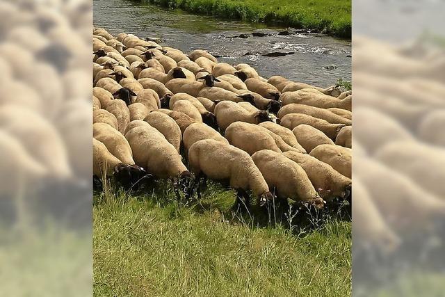 Exkursion für Schafhalter