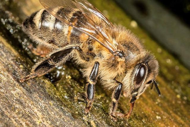 Sei mutig, kleine Biene