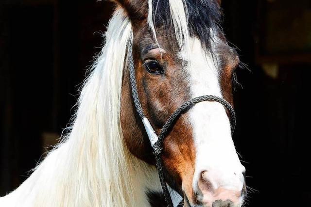 Ist der Pferdeschänder zurück? Zwei Pferde in Umkirch und Freiburg misshandelt