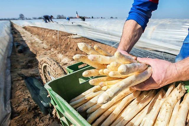 Erzeugergroßmarkt Südbaden kämpft mit sinkendem Umsatz