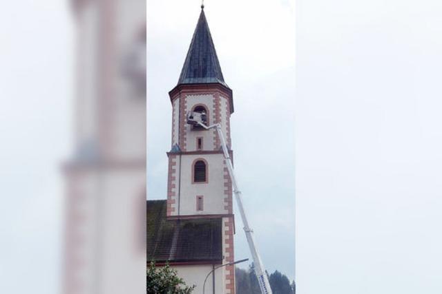 Kirche verbannt Tauben aus Turm